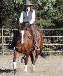 Blog-Image-Horse being ridden comfortably