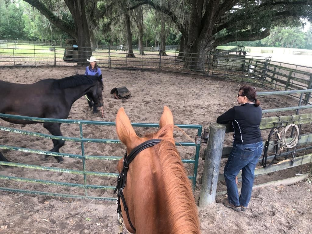 Starting a horse under saddle