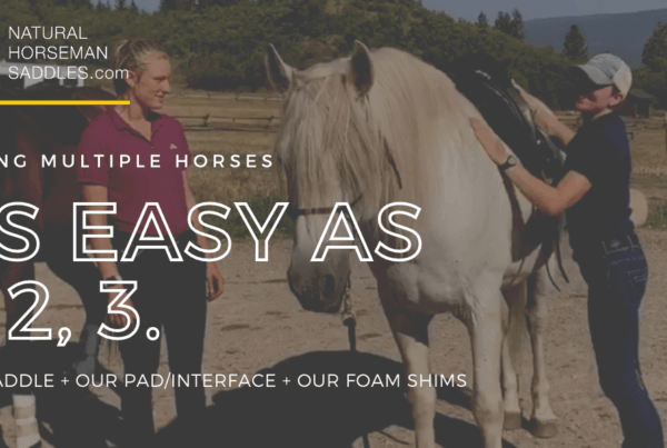 blog header multiple horses