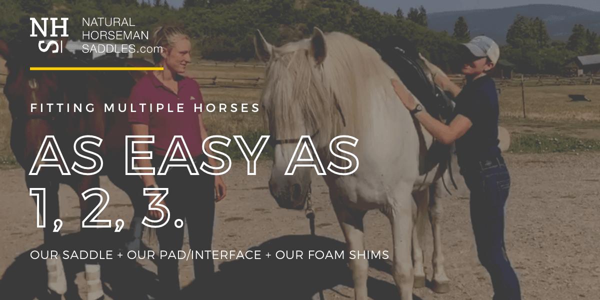 blog header multiple horses