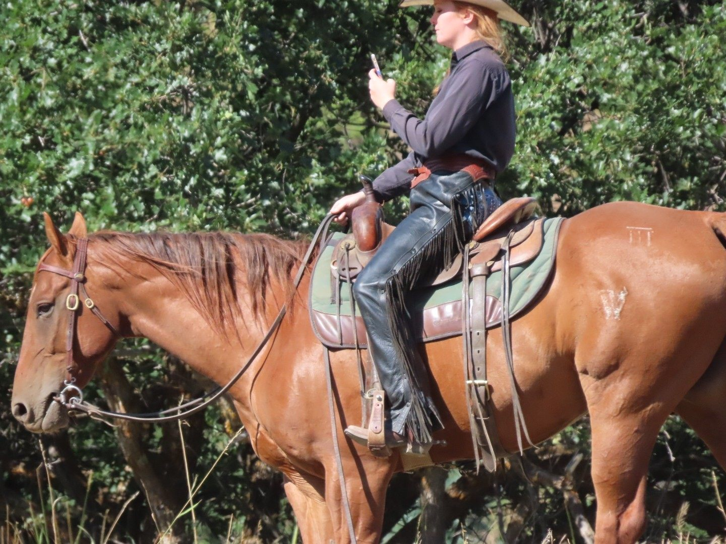Riding horses with mobile phones