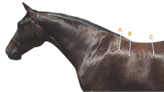 3 areas we measure to establish saddle fit.