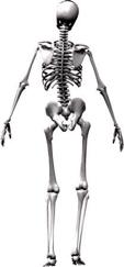 ill aligned human skeleton