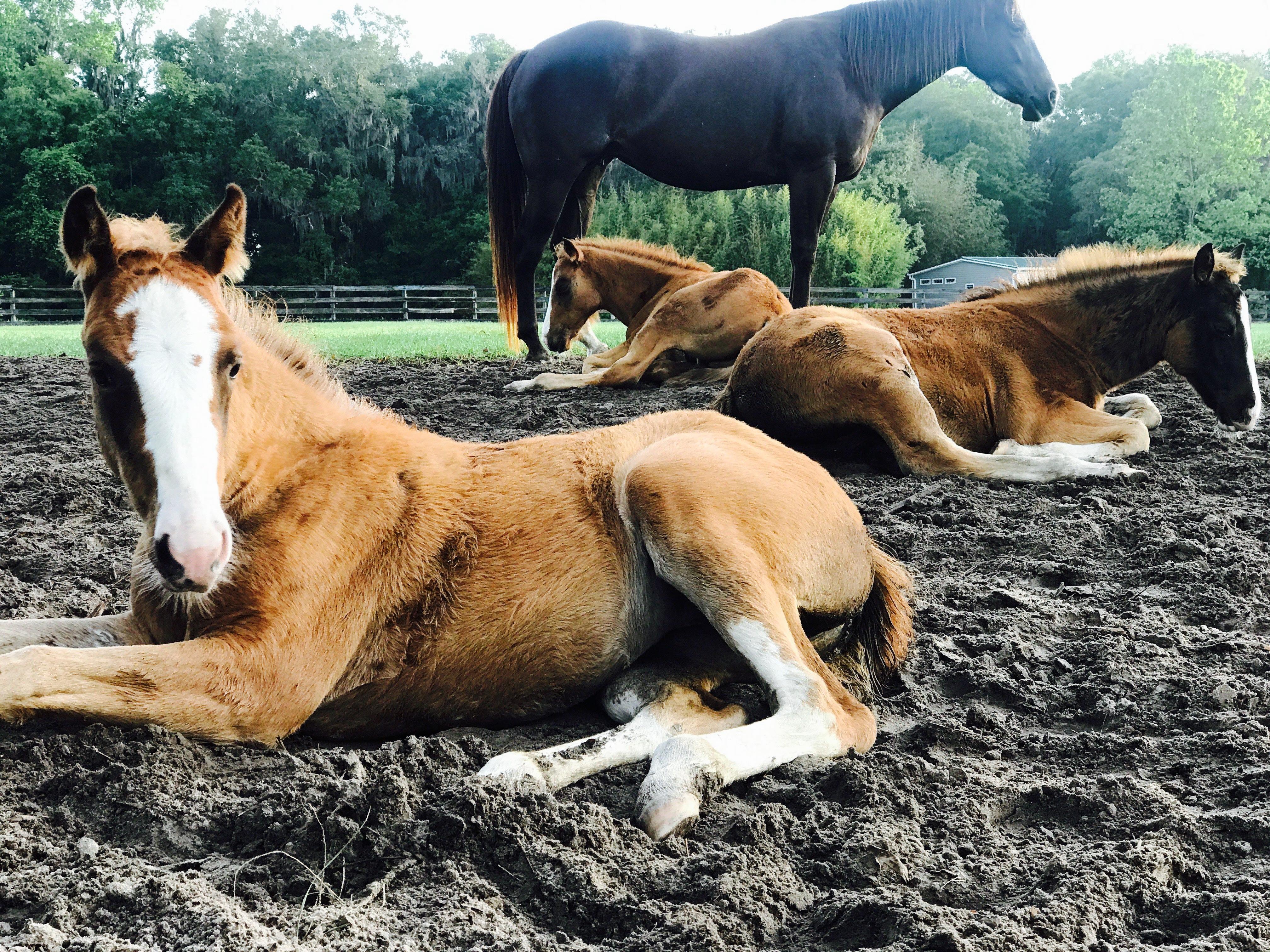 Baby Foals