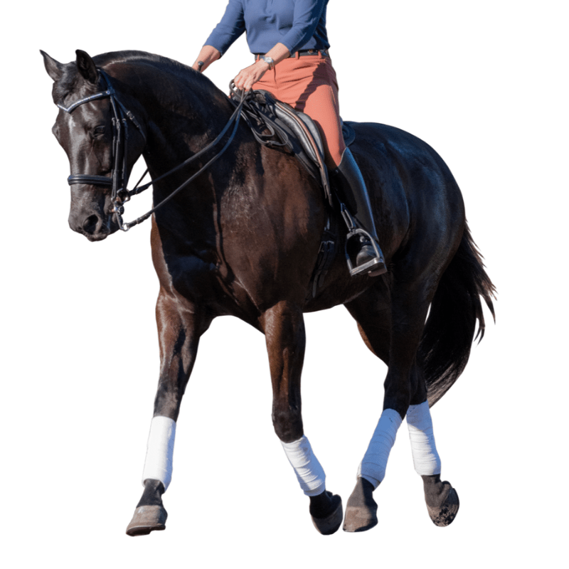 Riding a Glenn Secret Pro Dressage Saddle