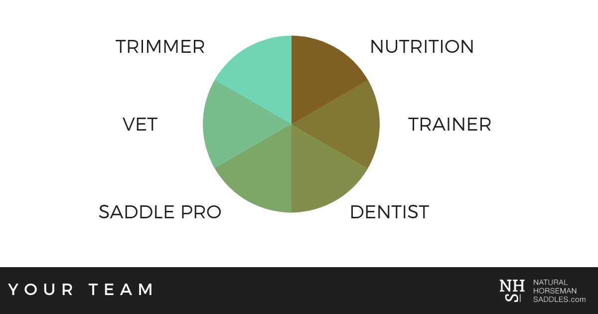 Horse Health Team - Trimmer, Nutrition, Trainer, Dentist, Saddle Pro, Vet.