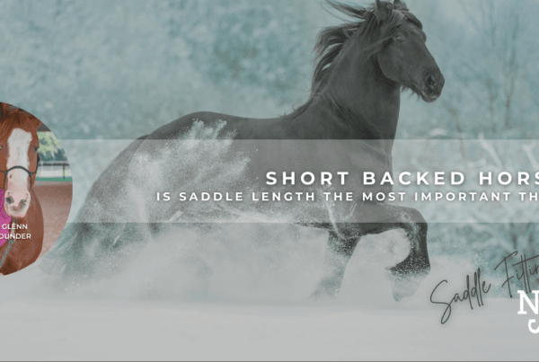 BLOG-Header-Short-Backed-Horses